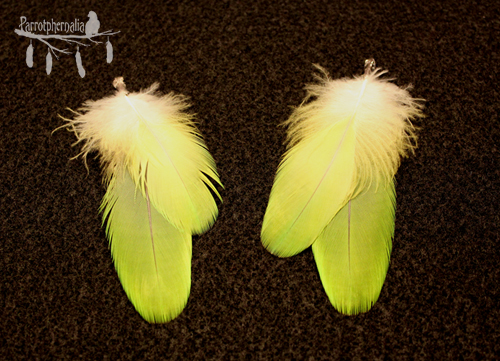 Nearly neon green feather earrings.